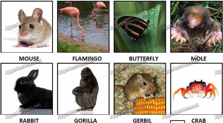 100 Pics Animals 25-32