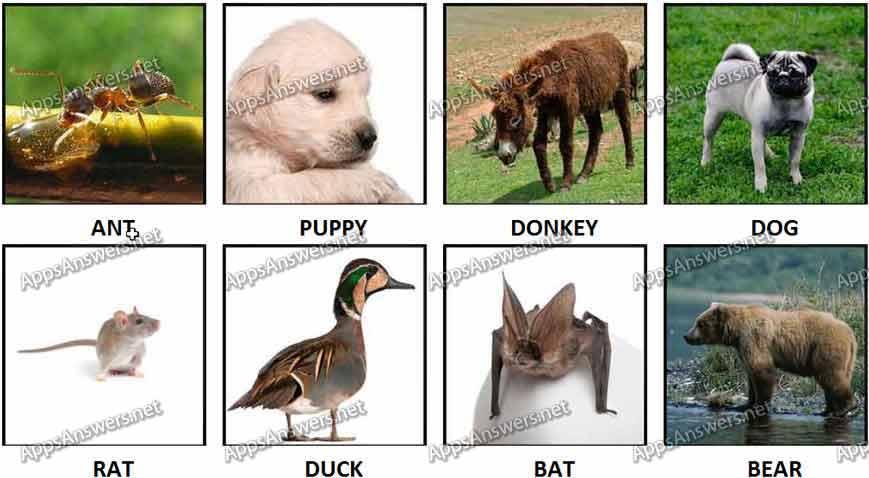 100 Pics Animals 9-16