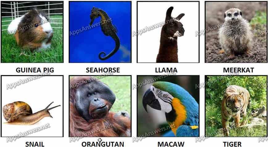 100 pics Animals 57-64