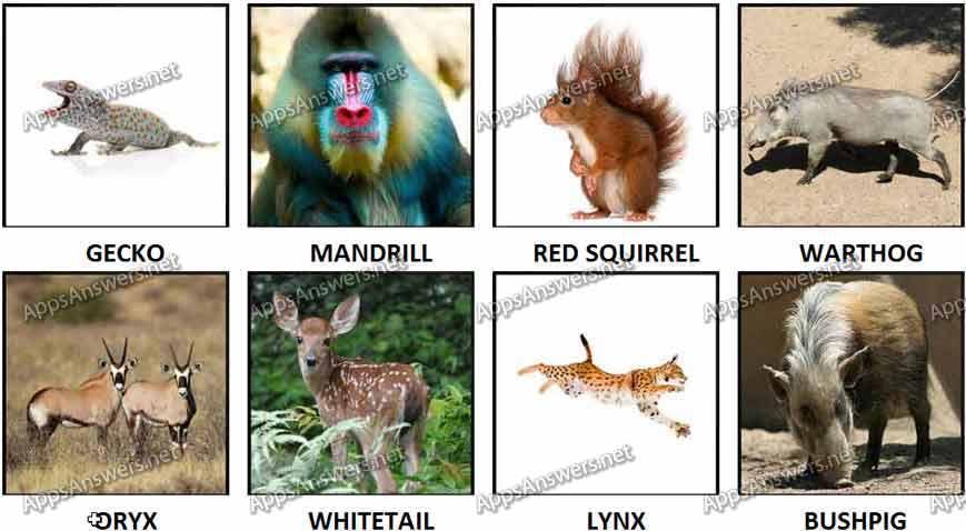 100 pics Animals 73-80