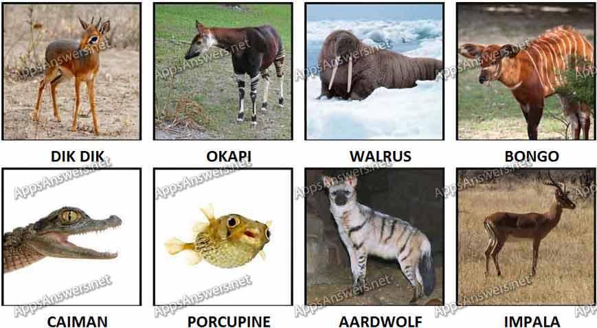 100 pics Animals 81-88