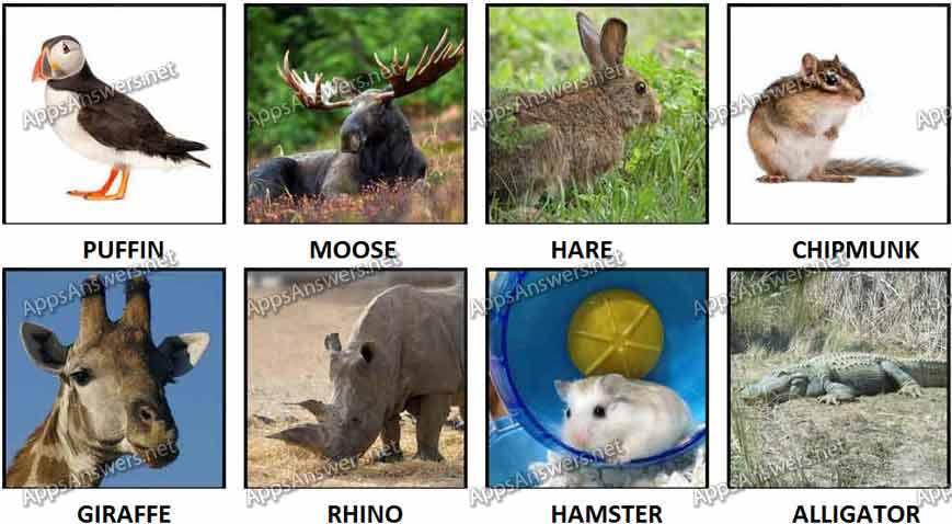 100 Pics Animal 33-40