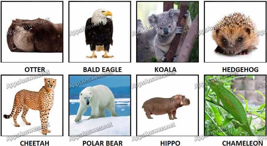 100 Pics Animal 41-48